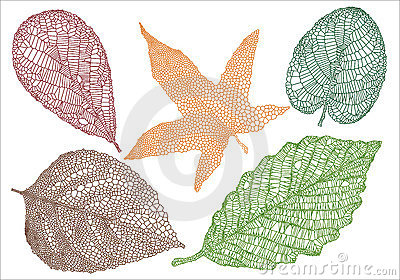 Hojas de otoño Textured
