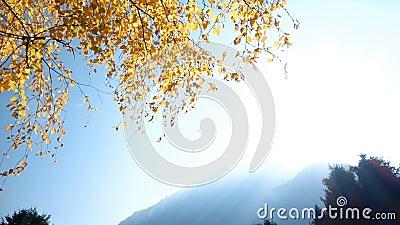 Hojas del amarillo contra el cielo azul metrajes