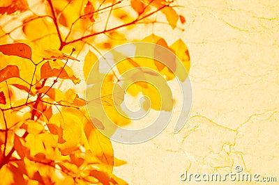 Hojas del amarillo del otoño