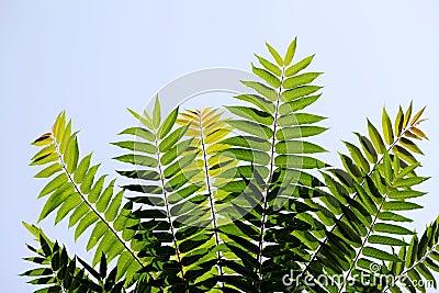 Hojas del verde contra el cielo