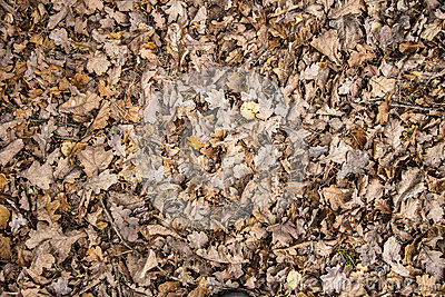 hojas de la tierra: