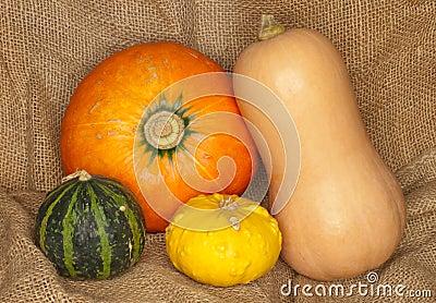 Hokkaido, butternut and warty pumpkins