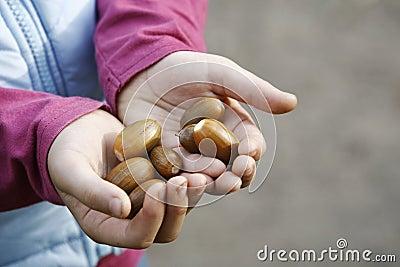 Holding acorns