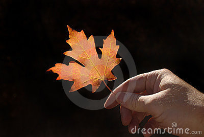 Holding Autumn Leaf