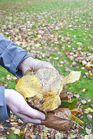 Holding autumn leafs