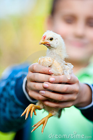 Holding baby chick