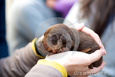 Holding brown puppy dog