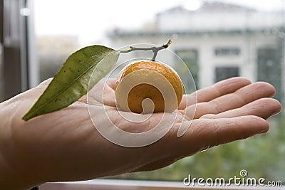 Holding fruit