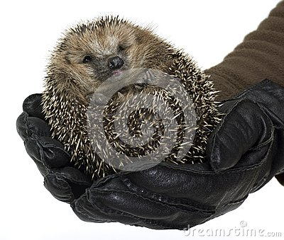 Holding a hedgehog