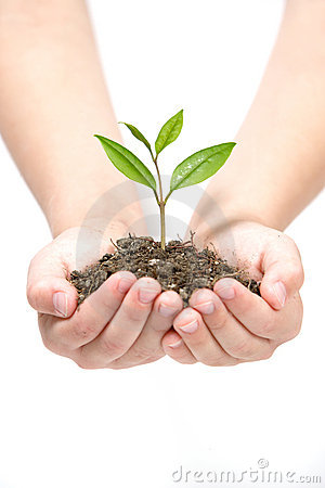 Free Holding Small Plant Stock Photos - 4643133