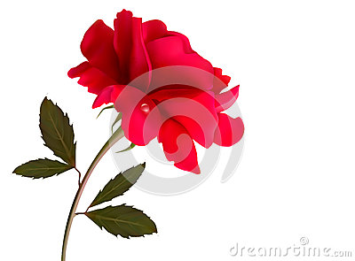 Holiday background with red beautiful rose.