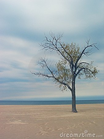 Holland Beach Tree