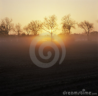 Free Holland, Landscape With Trees At Sunrise Stock Images - 12049964