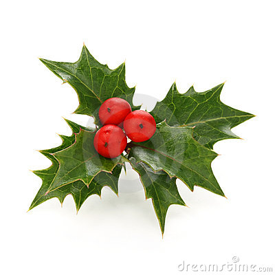 Free Holly Berry Sprig, Christmas Symbol Stock Images - 22361144