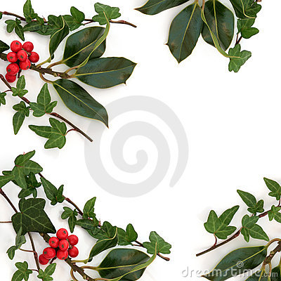 Holly and Ivy Border