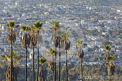 Hollywood Hillside Palms