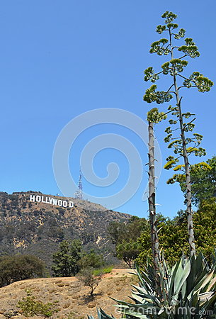 Hollywood sign Editorial Photography