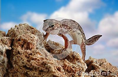 Holodactylus africanus