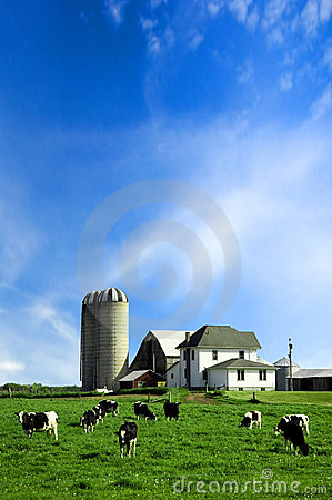 Free Holstein Cows In Pasture Stock Image - 9029271