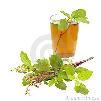 Free Holy Basil Tulsi Tea Ayurvedic Remedy Royalty Free Stock Images - 17463519