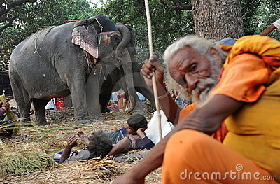 Holy elephant Editorial Photo