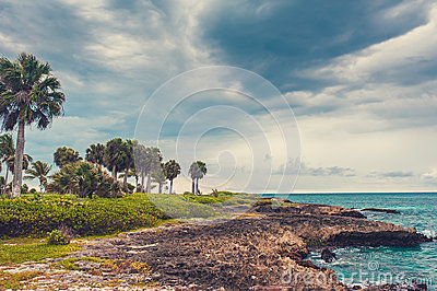 Ладонь и тропический пляж в тропическом рае. Временя holyday в Доминиканской Республике, Сейшельских островах, Вест-Инди, Филиппин