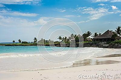 Φοίνικας και τροπική παραλία στον τροπικό παράδεισο. Καλοκαίρι holyday στη Δομινικανή Δημοκρατία, Σεϋχέλλες, Καραϊβικές Θάλασσες,