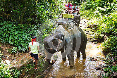 Hombre con su elefante en el senderismo en Tailandia Foto de archivo editorial