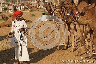 Hombre indio con los camellos Imagen de archivo editorial