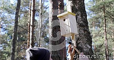 Hombre que clava la casa del pájaro en el tronco de árbol almacen de metraje de vídeo