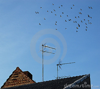 Free Home Antenna For Television Royalty Free Stock Photo - 3307205