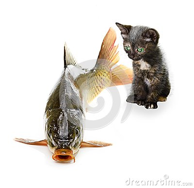 Home cat and a carp