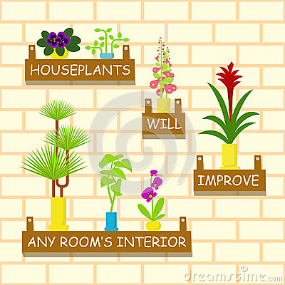 Home flowers in pots Vector Illustration