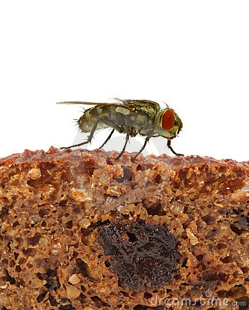 Home fly sitting on slice of bread
