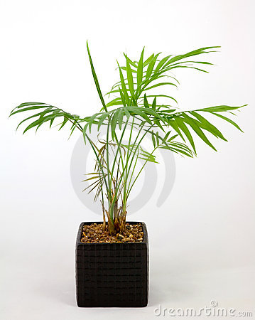 Free Home Pot Plant Stock Images - 1863254