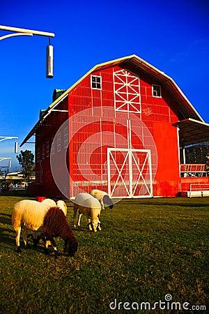 Home Sheep.