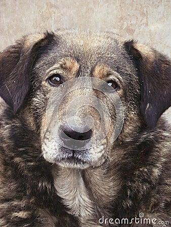Homeless. Stray dog. A head of a dog.