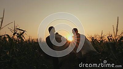 Homens com os sacos do milho no campo vídeos de arquivo