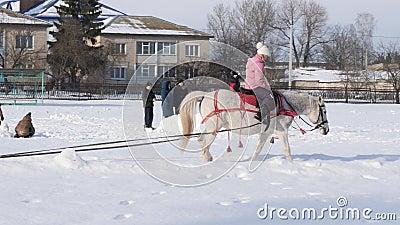 HOMIEL', BIELORUSSIA - 19 GENNAIO 2019: un cavaliere su un cavallo rotola un bambino su una slitta su una tubatura archivi video
