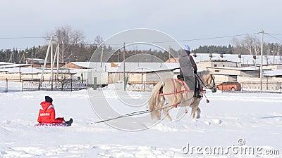 HOMIEL', BIELORUSSIA - 19 GENNAIO 2019: un cavaliere su un cavallo rotola un bambino su una slitta su una tubatura stock footage