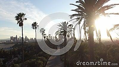 Hommelmening door lange palmen aan Los Angeles van de binnenstad stock video