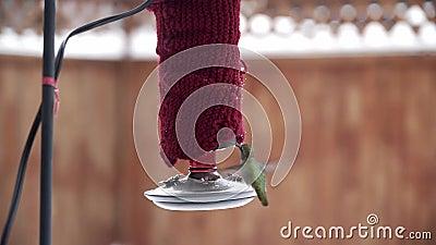 Honale Anna's Hummingbird-matning från röda hobbyfeeder i vintertid arkivfilmer