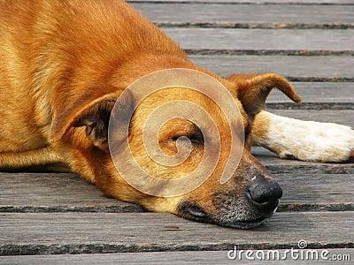Hond 2 van de straat