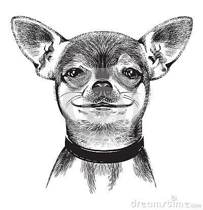 Hond Chihuahua. Illustratie
