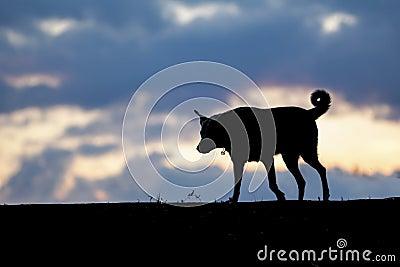 Hond in de schaduw
