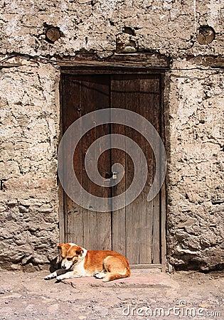Hond die in een deuropening rust