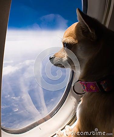 Hond die uit vliegtuigvenster kijkt
