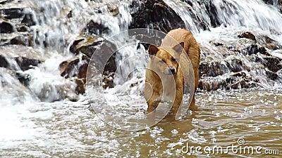 Hond en de cascade stock video