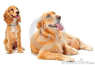 Hond en Puppy