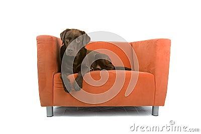 Hond op bank royalty vrije stock afbeeldingen afbeelding 11807409 - Eigentijdse badkuip ...